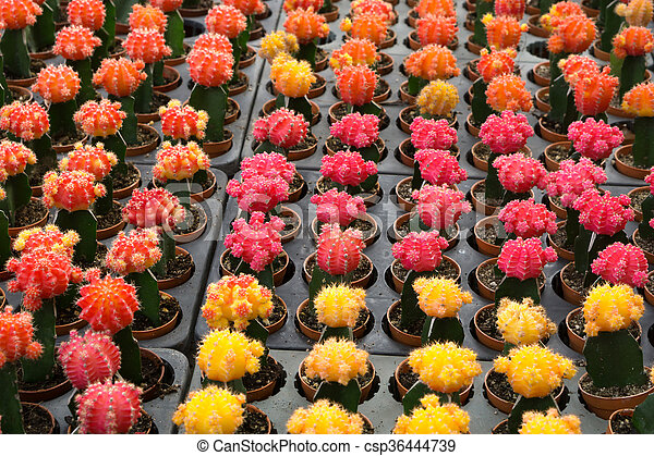 Red and yellow cactus desert plant red and yellow cactus flower red and yellow cactus desert plant csp36444739 mightylinksfo