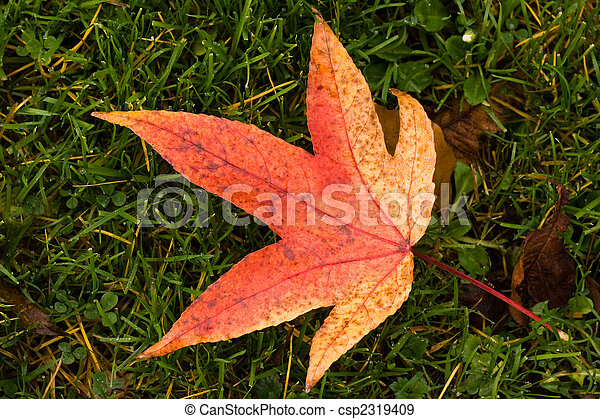 Red and yellow fallen leaf on grass in fall - csp2319409
