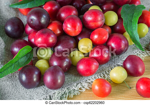 Red and yellow ripe plums on the table. - csp62202960