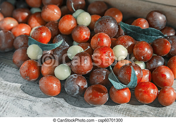 Red and yellow ripe plums on the table. - csp60701300
