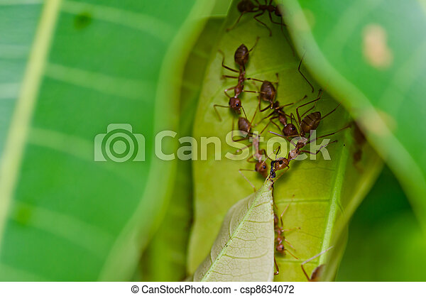red ant power in green nature - csp8634072