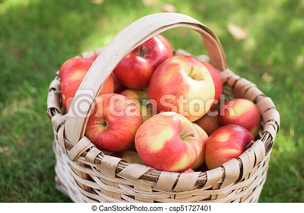 Red apples in a basket - csp51727401