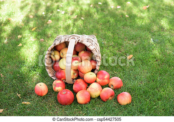 Red apples in a basket - csp54427505