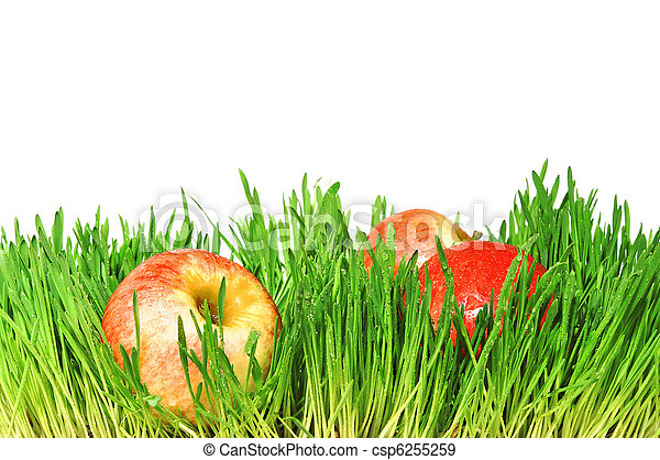 Red apples in a green grass - csp6255259