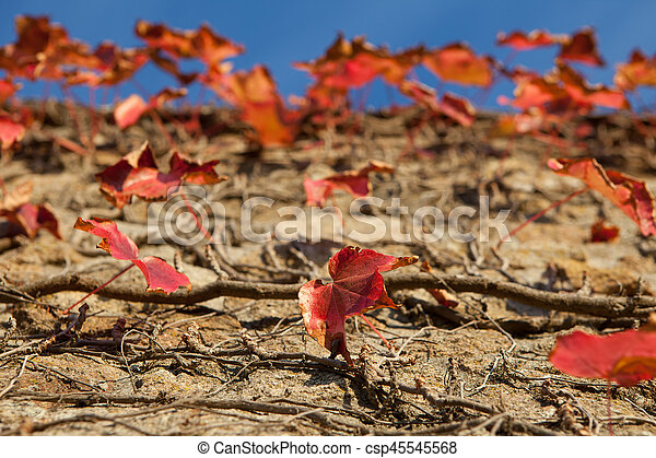 Red autumn leaves on a stone wall - csp45545568