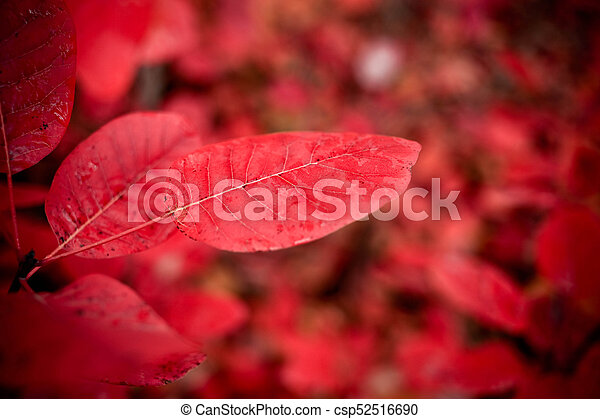 Red autumn leaves on a wall, background - csp52516690