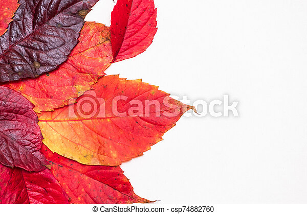 red autumn leaves on a white background - csp74882760