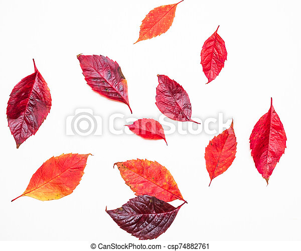 red autumn leaves on a white background - csp74882761
