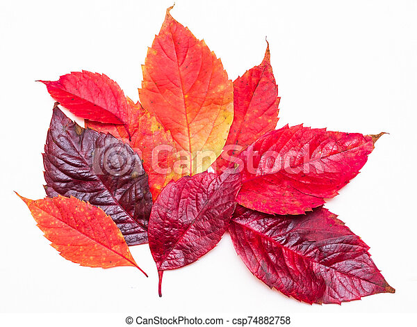 red autumn leaves on a white background - csp74882758