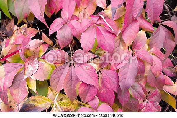 Red autumn leaves - csp31140648