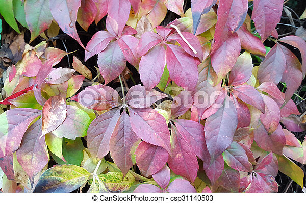 Red autumn leaves - csp31140503