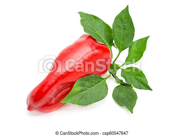 Red bell pepper and twig with leaves on a white background - csp60547647