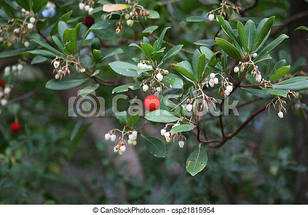 Red berries and small white flowers on a branch red berries and small white flowers csp21815954 mightylinksfo