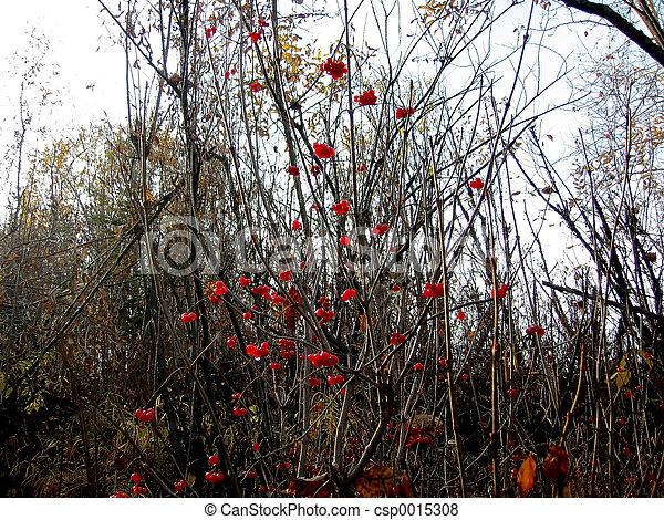 Red Berries - csp0015308