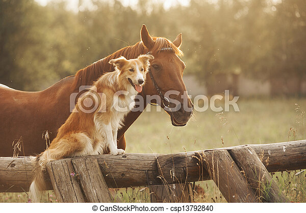 Red border collie dog and horse - csp13792840