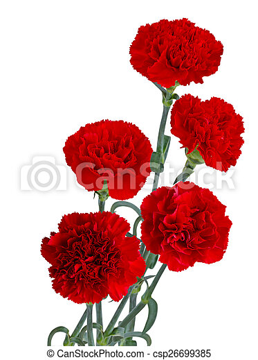 red carnation bouquet red carnation flower bouquet isolated on