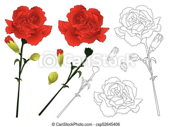 54ee2b49d Red carnation flower vector illustration. Dianthus caryophyllus ...