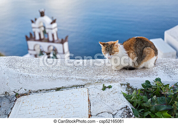 Red cat is sleeping on the wall near the sea - csp52165081