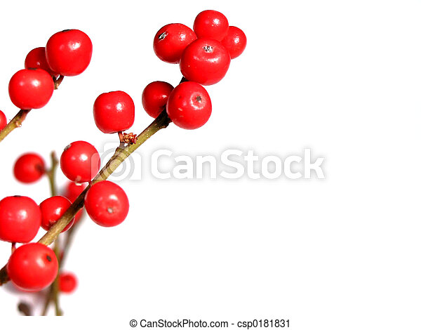 Red christmas berries on white - csp0181831