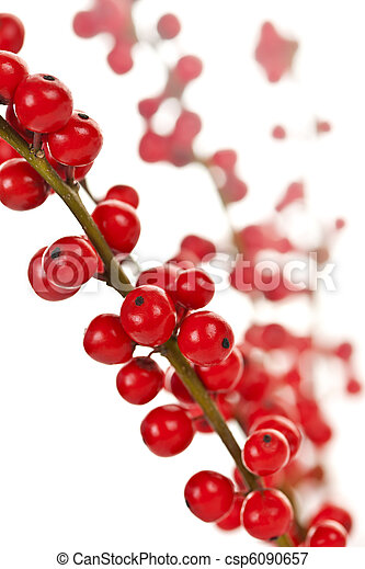 Red Christmas berries - csp6090657