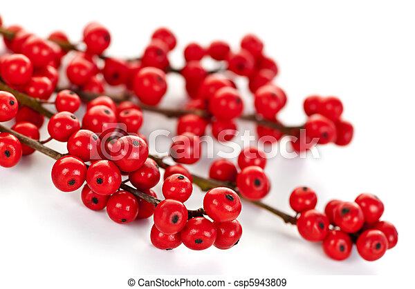 Red Christmas berries - csp5943809