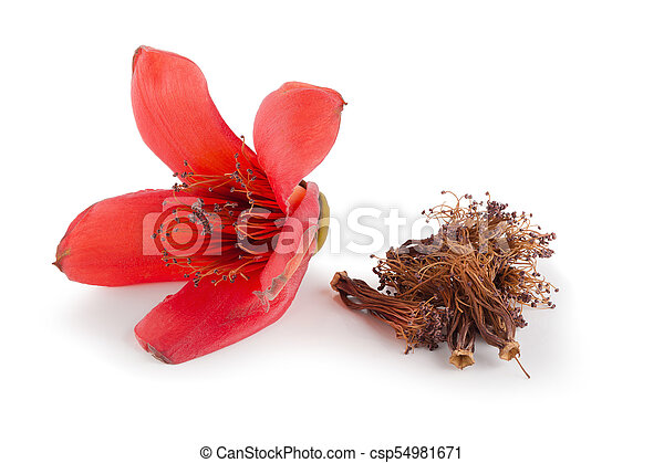 Red cotton tree flowers on white background, Bombax ceiba flower is a kind  of traditional Chinese medicine