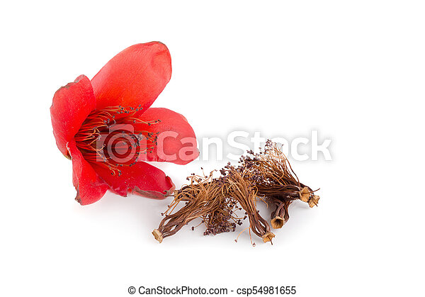 Red cotton tree flowers on white background bombax ceiba flower is red cotton tree flowers on white background bombax ceiba flower is a kind of traditional chinese medicine mightylinksfo