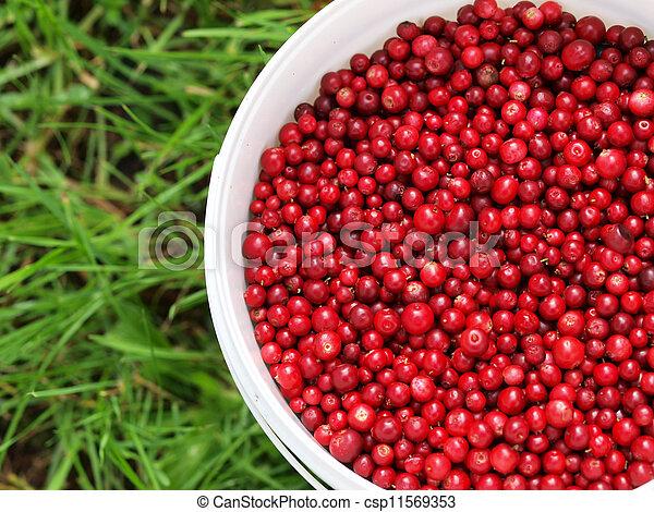 Red cranberries in a bucket - csp11569353