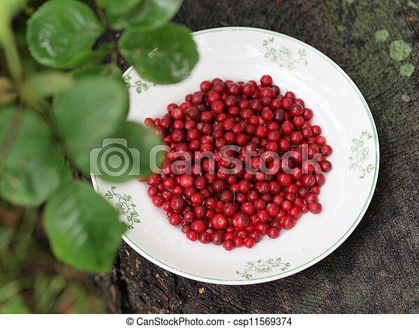 Red cranberries on a plate - csp11569374
