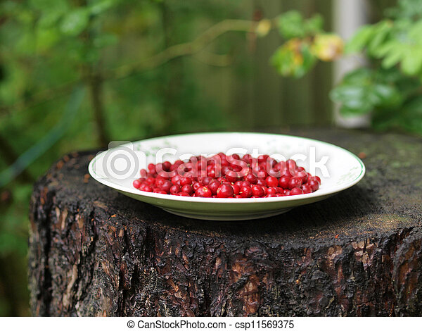 Red cranberries on a plate - csp11569375
