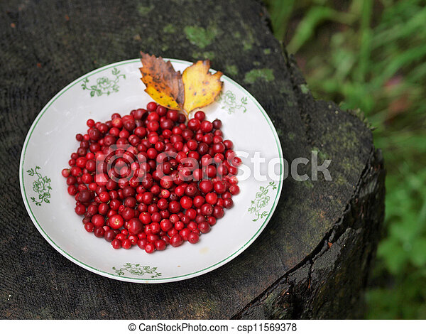 Red cranberries on a plate - csp11569378