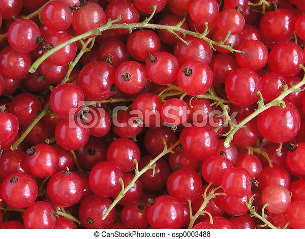 Red Currant - csp0003488