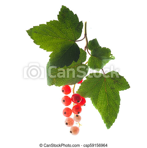red currants with a green leaf isolated on white - csp59156964