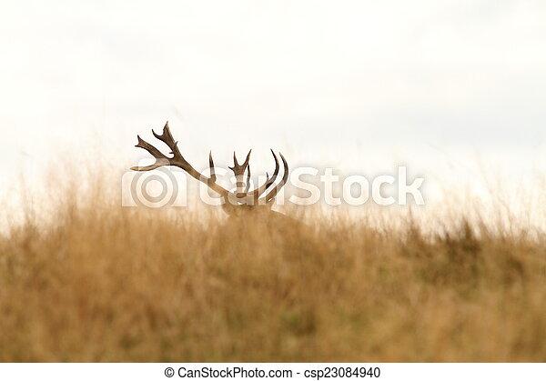 red deer big trophy - csp23084940