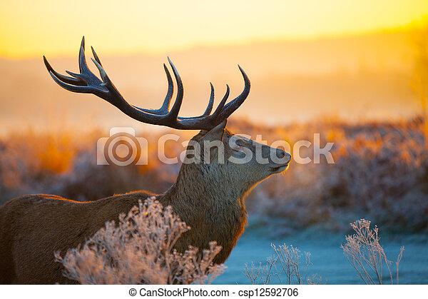 Red Deer in Morning Sun. - csp12592706