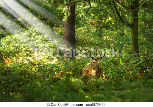 Red Deer Rutting Season Autumn Fall - csp5829414