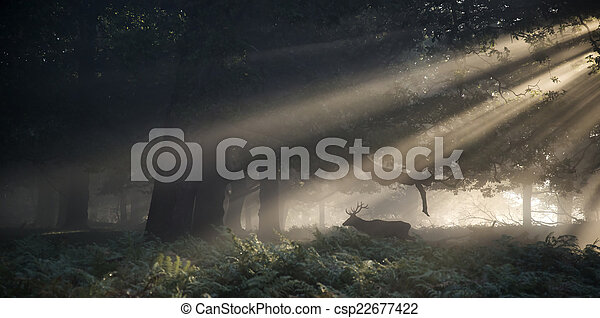 Red deer stag illuminated by stunning sun beams through forest l - csp22677422