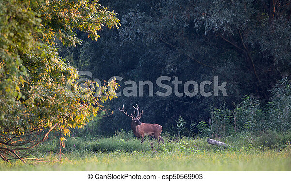 Red deer standing in forest - csp50569903