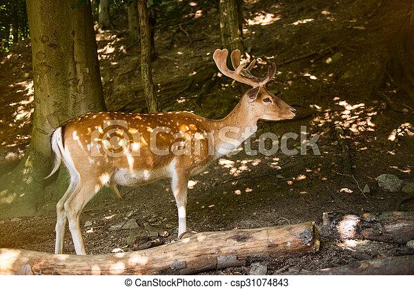Red Deer  - csp31074843