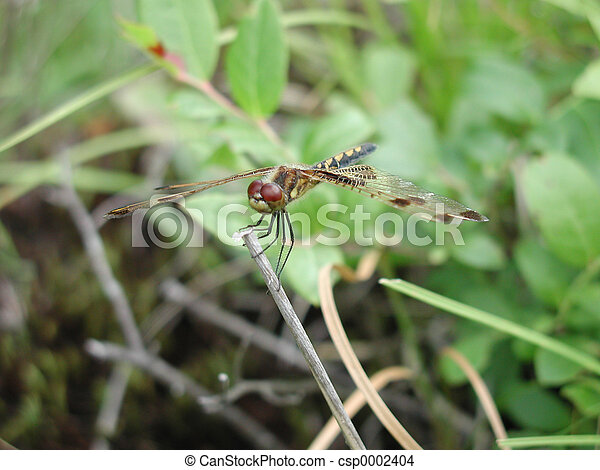 red eyed dragonfly - csp0002404