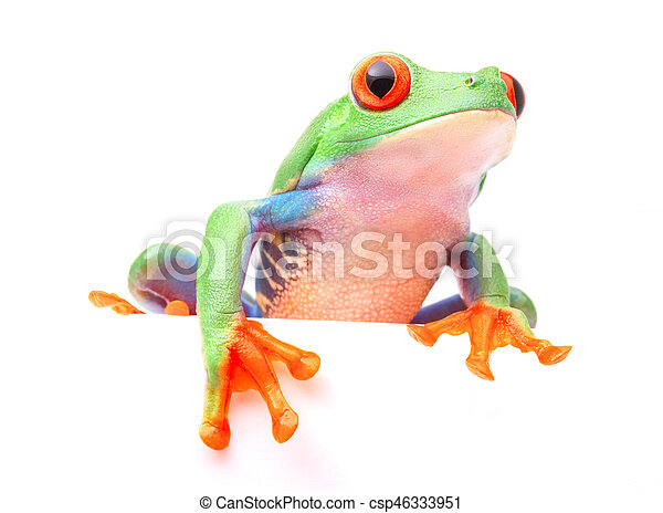 Red eyed tree frog from the tropical rain forest - csp46333951