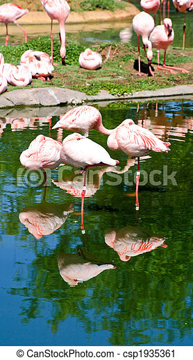red flamingo in a park in Florida - csp1935361