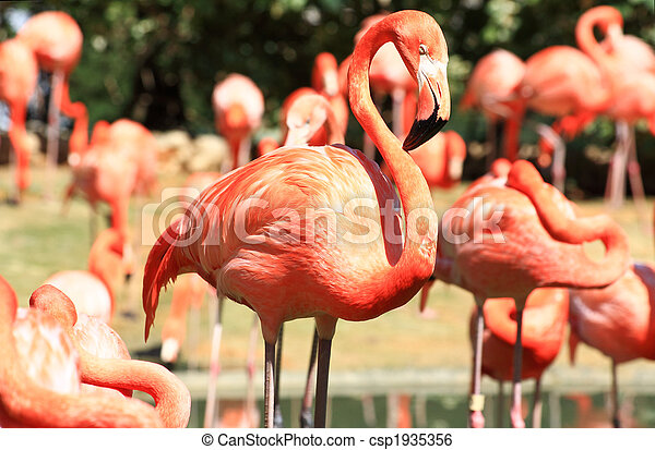 red flamingo in a park in Florida - csp1935356