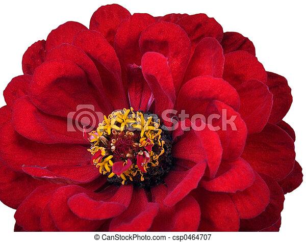 Red flower (1) - csp0464707