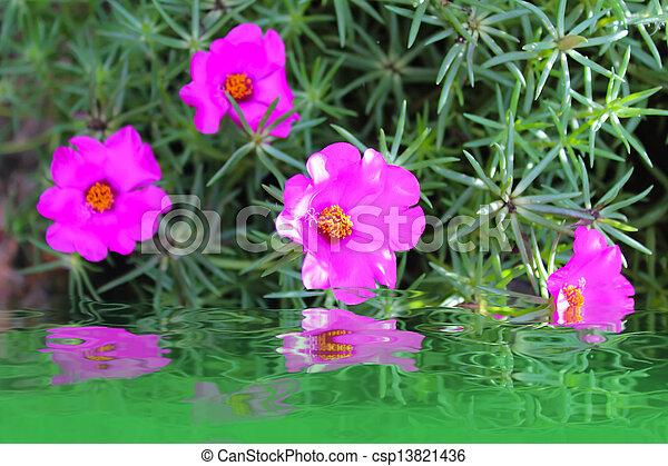 red flower beautiful - csp13821436