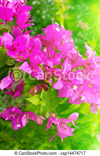 red flower blooming - csp14474717