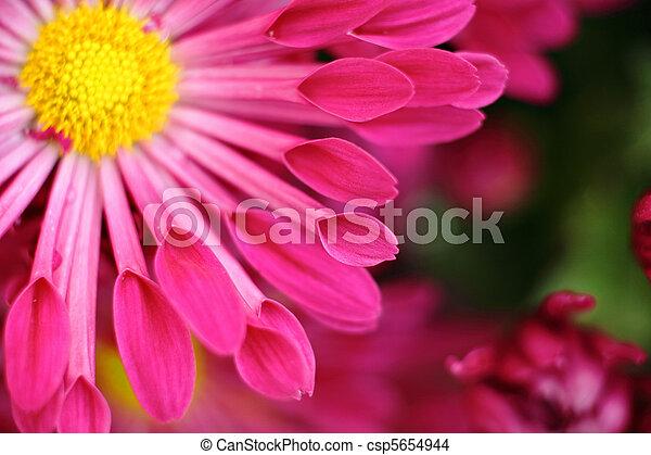 red flower macro - csp5654944