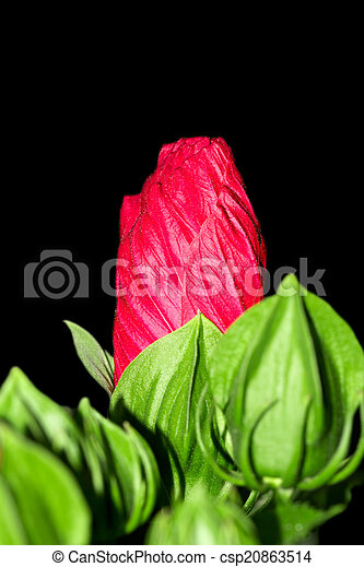 red flower on a black background - csp20863514