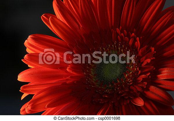 red flower - csp0001698