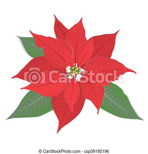 Red Flower Poinsettia On White Red Christmas Flower Poinsettia On